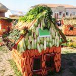Что происходит с морковью в подмосковном Дмитрове?